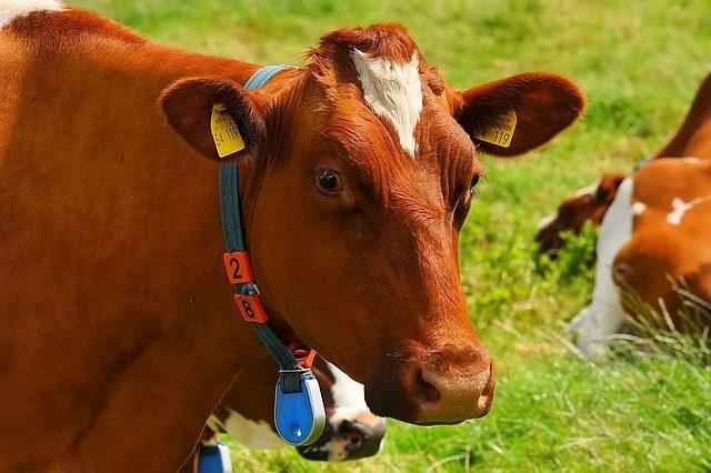 hayvancılık devlet desteği